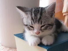 Cat Nap. http://kittyflix.com