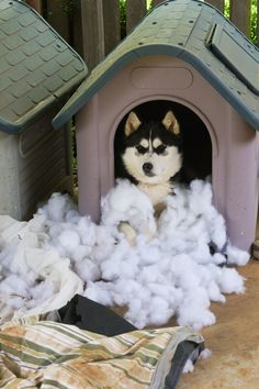 Our husky decided she needed some snow ;)