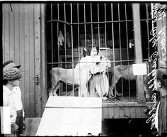 Madame Adgie Castillo stroking Teddy, a lion, who killed Madame's finace.
