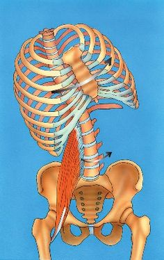 The Opinionated Psoas, Part 3 || Massage Therapy Articles: The psoas and its effects on the transverse and coronal planes.