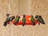 How to Attract Hummingbirds - Tips for Attracting Hummingbirds
