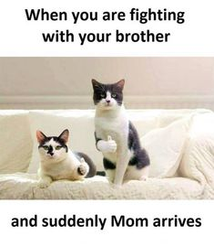 56 ideas funny sarcastic jokes hilarious cat memes for 2019 Super Funny Memes, Funny Animal Memes, Funny Animals, Funniest Animals, Animal Humor, Memes Humor, New Memes, The Dankest Of Memes, Funny Pictures Images