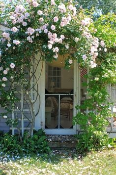 screen door climbing pink roses,