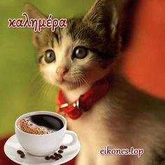 Πανέμορφα γατάκια σας λένε όμορφες καλημέρες! - eikones top Cats, Animals, Design, Gatos, Animales, Animaux, Animal, Cat, Animais