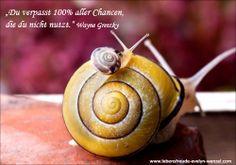 Du verpasst 100% aller Chancen, die du nicht nutzt. Lust auf mehr Lebensfreude und Zitate? Dann schau vorbei: www.lebensfreude-evelyn-wenzel.com