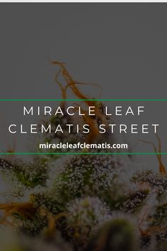 See a Marijuana Doctor at Miracle Leaf to start the process of getting your medical #marijuana card in West Palm Beach, Florida. Perfect Image, Perfect Photo, Love Photos, Cool Pictures, Clematis Street, West Palm Beach, Medical Marijuana, Doctors, Thats Not My