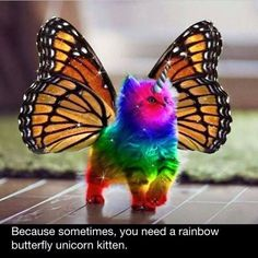 Because sometimes, you just need a rainbow butterfly unicorn kitten to brighten your day!