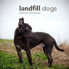 Landfill Dogs | Photo book preview | Blurb Books.  $35.  Dogs waiting for their forever homes, Raleigh, NC.