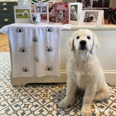 The pawfect model showing off their new T-shirt New T, Hamper, Laundry, Fans, Organization, Model, Shirts, Home Decor, Laundry Room