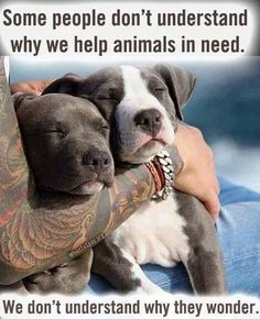 Some people don't understand why we help animals in need. We don't understand why they wonder.