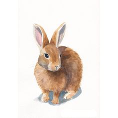 Rabbit Painting Archival print of watercolor painting 5 by 7