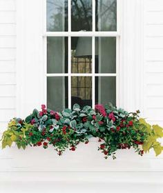 sunny window flowerbox - dusty miller, calibrachoa, verbena, sweet-potato vine