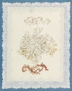 Fine specimen of a 19th-century seaweed album, in which marine algae is rendered into designs, bouquets, and even sometimes intricate little scenes.