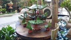 DIY Fairy Garden Leaf Table, Chairs and Umbrella made out of clay with grape and rose leaf imprints.