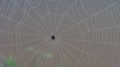 spider in house....