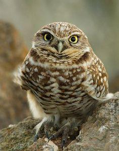 "owl says...""really..?"""