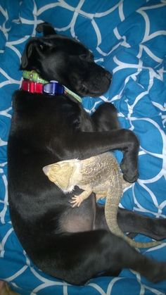 And it's obvious why: dogs don't discriminate based on species.   17 Pictures That Prove Dogs Are Friends With Literally Everybody