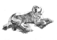 Hand drawn pencil portrait of a #GoldenRetriever puppy relaxed on the sand. Commission artist Genevieve Schlueter to sketch your pet at http://www.gensart.net