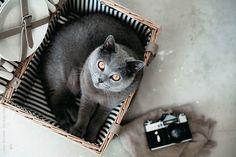 Cat in a basket by Lukas Korynta for Stocksy United