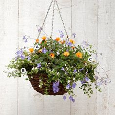 Good ideas for hangingbaskets Better Homes Hanging basket with Streptocarpella 'Concord Blue' Bacopa (Sutera 'Snowstorm') Osteospermum 'Orange Symphony'. Hanging Flower Baskets, Hanging Plants, Hanging Gardens, Double Impatiens, Easy Waves, Hens And Chicks, Potting Soil, Living At Home, Concorde