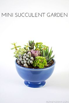 How to plant a Mini Succulent Garden