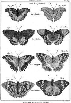 Planche de papillons de l'Encyclopédie de Diderot et d'Alembert
