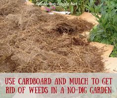Initially, you might have to mulch your no dig beds if they are covered in perennial weeds. A cover with cardboard and organic matter like leaves, compost or grass clipping several months beforehand is the easiest way to get rid of persistent weeds.