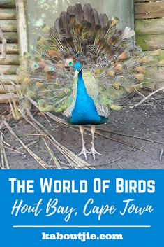 World Of Birds - Hout Bay - A Must See For Your Kids | Kaboutjie worldofbirds #capetown #houtbay #travel