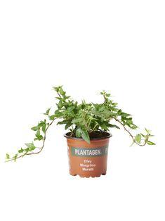 Planter Pots, Herbs, Medium, Sun, Herb, Medium Long Hairstyles, Medicinal Plants