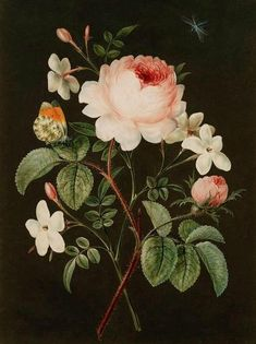 Barbara Regina Dietzsch (1706-1783) - Buscar con Google