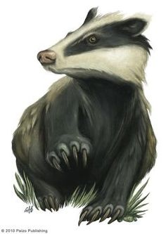 Explore the BESTIARY Animals - Vermin collection - the favourite images chosen by LJEKC on DeviantArt. Woodland Creatures, Fantasy Creatures, Badger Illustration, Wild Shape, Honey Badger, Zen Art, Mythological Creatures, Creature Feature, Spirit Animal
