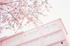 pink, sakura, and flowers image Kawaii Gifts, Pink Images, Tumblr Image, Pink Themes, Cute Stationery, Kawaii Shop, Color Rosa, Pink Aesthetic, Pastel Pink