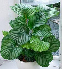 Эти 10 домашних растений смогут выжить в любых условиях! Даже в самом темном углу…
