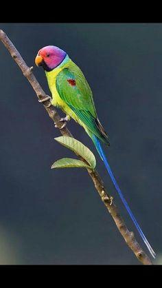 Começando o dia nessa energia,  cores da primavera!  #passarinhos #tudoverde #Love