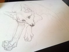 jumping FOX. WIP by =WhiteSpiritWolf on deviantART