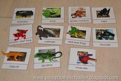 Rainforest Animals Control Cards (FREE PRINTABLE)