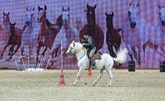 Jean Pierre Godest Camarguepferd  Working Equitation Cup EQUITANA 2015 www.pferd-kultur.de/content/ein-großes-fest-equitana-2015-essen