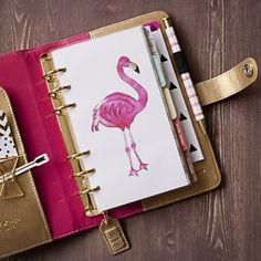 A flamingo kind of week!