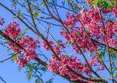 foto-arautos-do-evangelho2015_08_01___S_62754