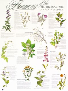 Flowers of the Homeopathic Materia Medica