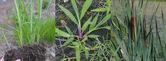 Weeds Identification App