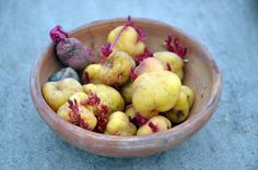 Who First Farmed Potatoes? Archaeologists in Andes Find New Evidence - The New York Times Starchy Vegetables, California, Times, Food, Potatoes Growing, Old Tools, Potatoes, University, Science