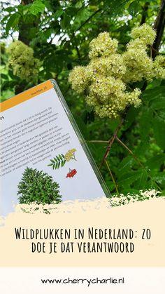 Wildplukken is een mooie manier om dichter bij de natuur te komen. Wildplukken in Nederland wordt over hel algemeen getolereerd als het voor eigen gebruik is. Plukken van zeldzame planten en in natuurreservaten is echter verboden. Maar hoe doe je dat, en hoe weet je welke planten eetbaar zijn? De Compactgids Wildplukken helpt je een handje. Lifestyle Blog