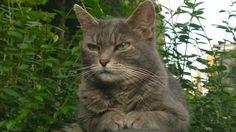 Éloigner les chats du jardin avec du marc de café