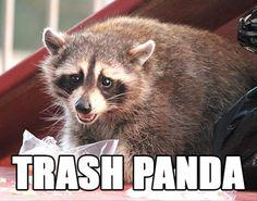 animal memes trash panda results - ImageSearch Funny Animal Names, Funny Names, Animal Jokes, Funny Puns, Funny Animal Pictures, Funny Photos, Funny Animals, Cute Animals, Hilarious