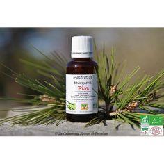 Macérat bio de bourgeons de Pin sylvestre : Excellent reminéralisant et anti-inflammatoire puissant