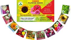 Only For Organic Summer Flower Seeds With Instruction Manual Variety, Seeds (Free Epsom Salt) Seeds Online, Organic Seeds, Epsom Salt, Flower Seeds, Summer Flowers, Free Delivery, Manual, India, Seasons