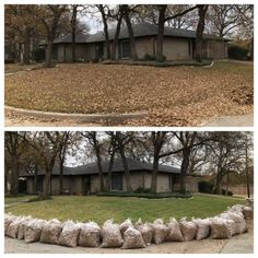Before and After of a huge leaf removal project at Handsome Lawn Service