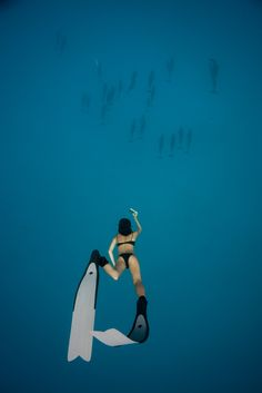Over the school of dolphins