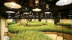 Tokio, fattorie nel sottosuolo. #Expo2015 #Urban Farming #Green #Farm